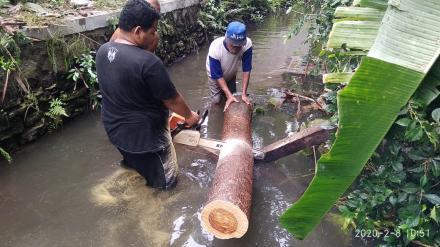 Penebangan pohon di Badan