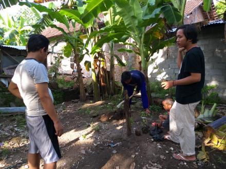 Penanaman Pohon oleh KKN IIQ AN NUR Yogyakarta